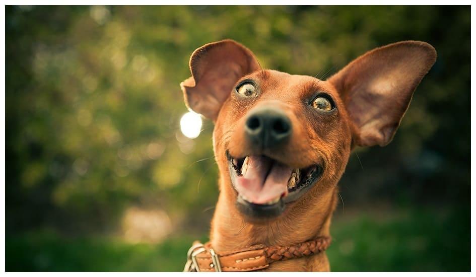 happy dog track report